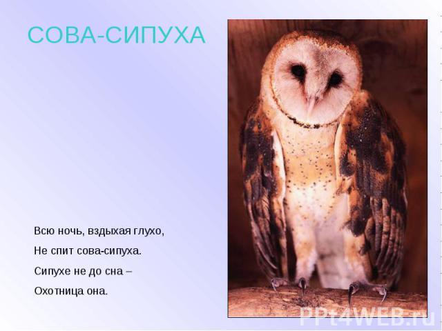 СОВА-СИПУХА