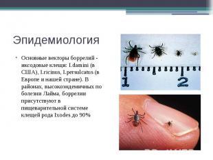 Эпидемиология Основные векторы боррелий - иксодовые клещи: I.damini (в США), I.r