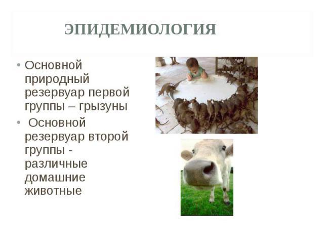 Основной природный резервуар первой группы – грызуны Основной природный резервуар первой группы – грызуны Основной резервуар второй группы - различные домашние животные