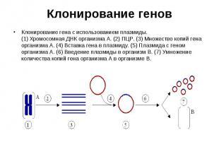 Клонирование гена с использованием плазмиды. (1) Хромосомная ДНК организма A. (2