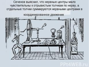 Сеченов выяснил, что нервные центры мало чувствительны к отрывистым толчкам по н