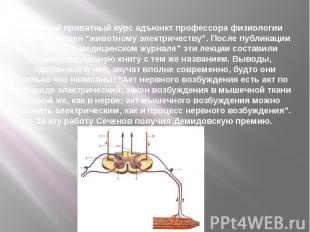 """Первый приватный курс адъюнкт профессора физиологии был посвящен """"животному элек"""