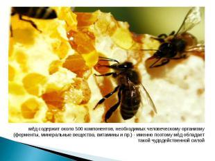 мёд содержит около 500 компонентов, необходимых человеческому организму (фермент