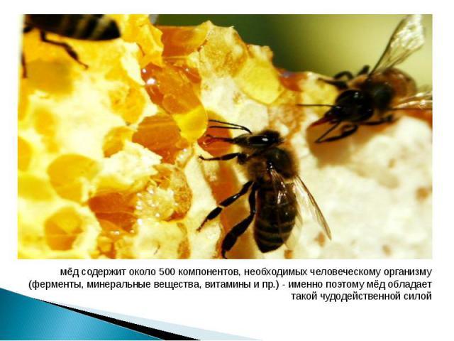мёд содержит около 500 компонентов, необходимых человеческому организму (ферменты, минеральные вещества, витамины и пр.) - именно поэтому мёд обладает такой чудодейственной силой мёд содержит около 500 компонентов, необходимых человеческому организм…