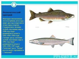Некоторые тихоокеанские лососи (горбуша, кета и др.) живут два года и нерестятся