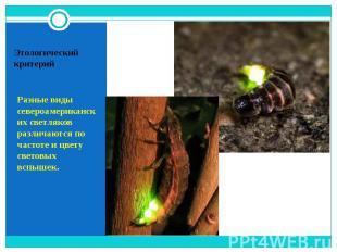 Разные виды североамериканских светляков различаются по частоте и цвету световых