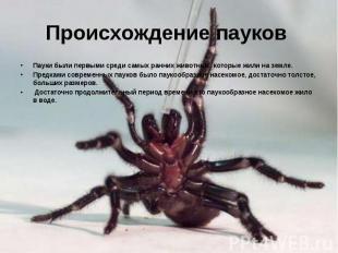 Происхождение пауков Пауки были первыми среди самых ранних животных, которые жил
