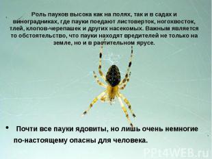 Роль пауков высока как на полях, так и в садах и виноградниках, где пауки поедаю