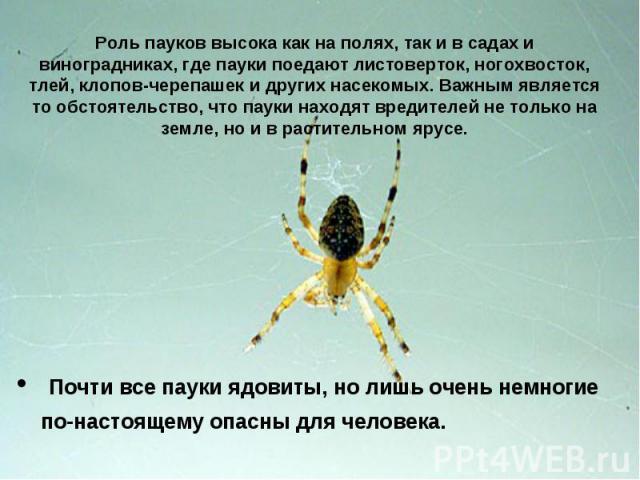 Роль пауков высока как на полях, так и в садах и виноградниках, где пауки поедают листоверток, ногохвосток, тлей, клопов-черепашек и других насекомых. Важным является то обстоятельство, что пауки находят вредителей не только на земле, но и в растите…
