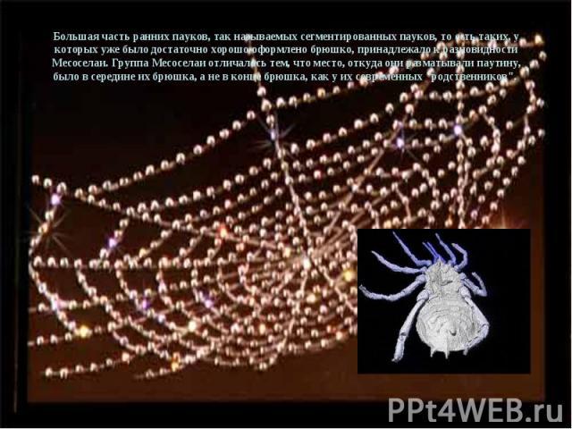Большая часть ранних пауков, так называемых сегментированных пауков, то есть таких, у которых уже было достаточно хорошо оформлено брюшко, принадлежало к разновидности Месоселаи. Группа Месоселаи отличалась тем, что место, откуда они разматывали пау…