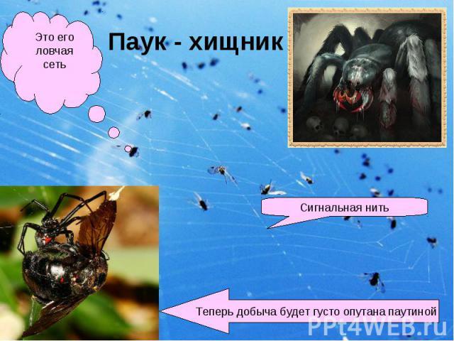 Паук - хищник