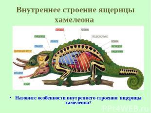 Назовите особенности внутреннего строения ящерицы хамелеона? Назовите особенност