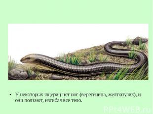 У некоторых ящериц нет ног (веретеница, желтопузик), и они ползают, изгибая все
