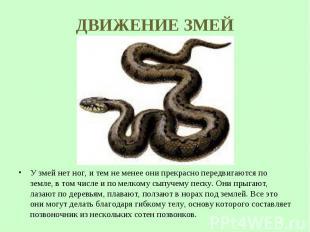 У змей нет ног, и тем не менее они прекрасно передвигаются по земле, в том числе