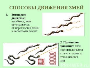 Змеящееся движение: изгибаясь, змея отталкивается отнеровностей земли в&nb