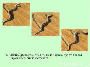 4. Боковое движение: змея движется боком, бросая вперед прыжком заднюю часть тел
