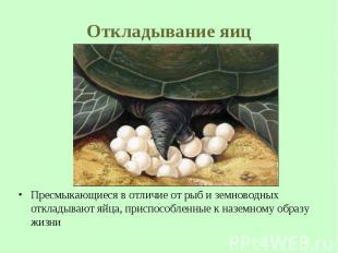 Пресмыкающиеся в отличие от рыб и земноводных откладывают яйца, приспособленные