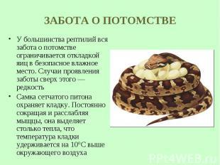 У большинства рептилий вся забота опотомстве ограничивается откладкой яиц