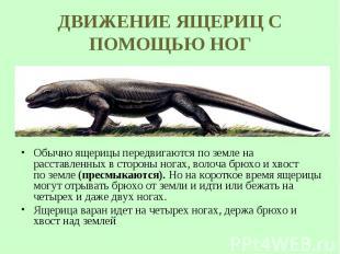 Обычно ящерицы передвигаются по земле на расставленных в стороны ногах, волоча б