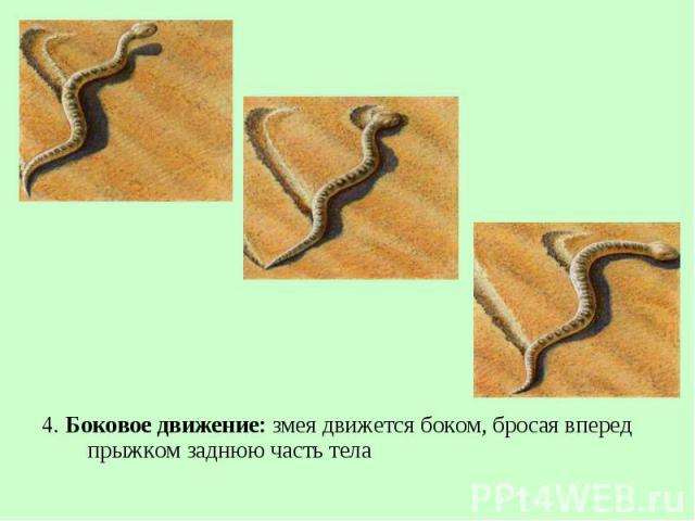 4. Боковое движение: змея движется боком, бросая вперед прыжком заднюю часть тела 4. Боковое движение: змея движется боком, бросая вперед прыжком заднюю часть тела