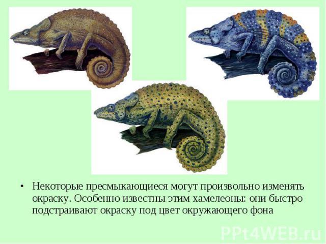 Некоторые пресмыкающиеся могут произвольно изменять окраску. Особенно известны этим хамелеоны: они быстро подстраивают окраску под цвет окружающего фона Некоторые пресмыкающиеся могут произвольно изменять окраску. Особенно известны этим хамелеоны: о…