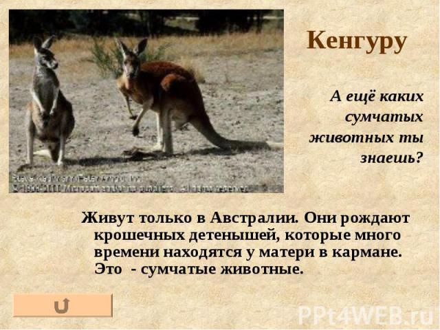 Живут только в Австралии. Они рождают крошечных детенышей, которые много времени находятся у матери в кармане. Это - сумчатые животные.