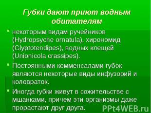 некоторым видам ручейников (Hydropsyche ornatula), хирономид (Glyptotendipes), в