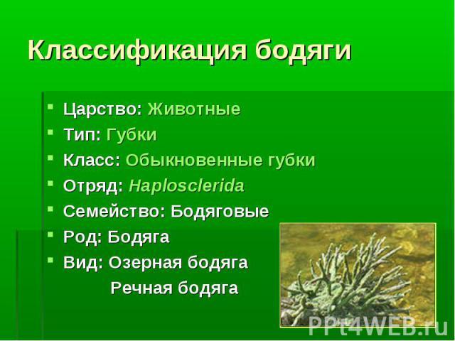 Царство: Животные Царство: Животные Тип: Губки Класс: Обыкновенные губки Отряд: Haplosclerida Семейство: Бодяговые Род: Бодяга Вид: Озерная бодяга Речная бодяга