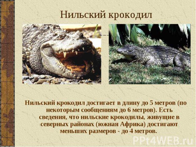 Нильский крокодил достигает в длину до 5 метров (по некоторым сообщениям до 6 метров). Есть сведения, что нильские крокодилы, живущие в северных районах (южная Африка) достигают меньших размеров - до 4 метров. Нильский крокодил достигает в длину до …