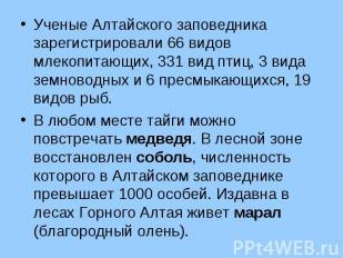 Ученые Алтайского заповедника зарегистрировали 66 видов млекопитающих, 331 вид п