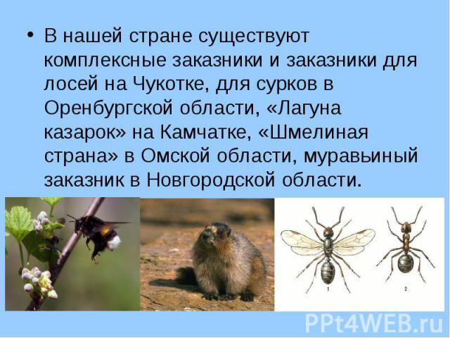 В нашей стране существуют комплексные заказники и заказники для лосей на Чукотке, для сурков в Оренбургской области, «Лагуна казарок» на Камчатке, «Шмелиная страна» в Омской области, муравьиный заказник в Новгородской области. В нашей стране существ…
