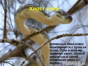 Древесные змеи ловко перебираются с сучка на сучок.. Руки и ноги им заменяет хво