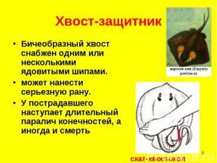 Бичеобразный хвост снабжен одним или несколькими ядовитыми шипами. Бичеобразный