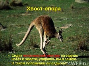 Сидит исполинский кенгуру на задних ногах и хвосте, упираясь им в землю. Сидит и