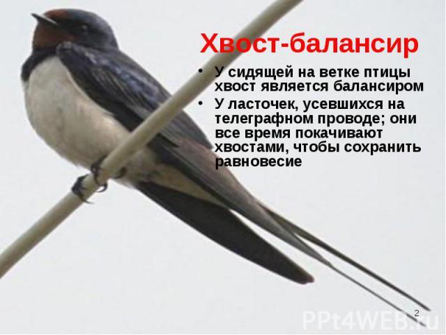 У сидящей на ветке птицы хвост является балансиром У сидящей на ветке птицы хвост является балансиром У ласточек, усевшихся на телеграфном проводе; они все время покачивают хвостами, чтобы сохранить равновесие