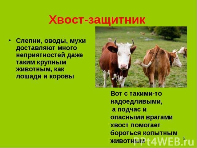 Слепни, оводы, мухи доставляют много неприятностей даже таким крупным животным, как лошади и коровы Слепни, оводы, мухи доставляют много неприятностей даже таким крупным животным, как лошади и коровы