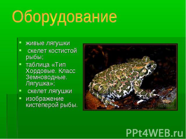 живые лягушки живые лягушки скелет костистой рыбы; таблица «Тип Хордовые. Класс Земноводные. Лягушка»; скелет лягушки изображение кистеперой рыбы.