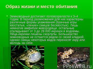 Земноводные достигают половозрелости к 3–4 годам. В период размножения для них х