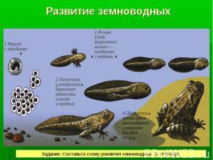 РАЗВИТИЕ Развитие лягушки происходит с превращением. РАЗВИТИЕ Развитие лягушки п