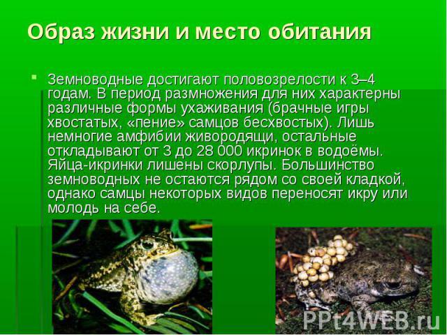 Земноводные достигают половозрелости к 3–4 годам. В период размножения для них характерны различные формы ухаживания (брачные игры хвостатых, «пение» самцов бесхвостых). Лишь немногие амфибии живородящи, остальные откладывают от 3 до 28000 икр…