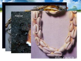 Раковины используются как сувениры и поделочный материал. В старину раковины кау