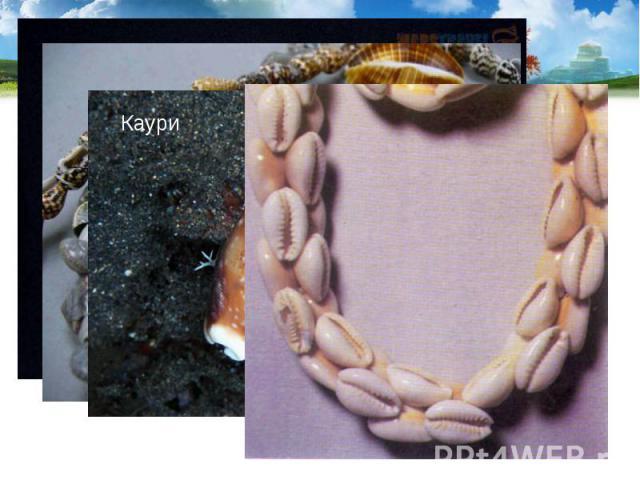 Раковины используются как сувениры и поделочный материал. В старину раковины каури в южных странах служили разменной монетой. Раковины используются как сувениры и поделочный материал. В старину раковины каури в южных странах служили разменной монетой.