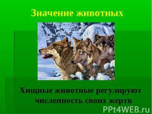 Хищные животные регулируют численность своих жертв Хищные животные регулируют чи