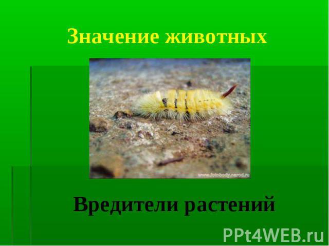 Вредители растений Вредители растений