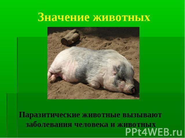 Паразитические животные вызывают заболевания человека и животных Паразитические животные вызывают заболевания человека и животных