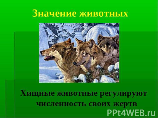 Хищные животные регулируют численность своих жертв Хищные животные регулируют численность своих жертв
