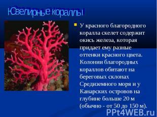 У красного благородного коралла скелет содержит окись железа, которая придает ем