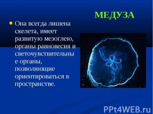Она всегда лишена скелета, имеет развитую мезоглею, органы равновесия и светочув