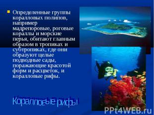 Определенные группы коралловых полипов, например мадрепоровые, роговые кораллы и