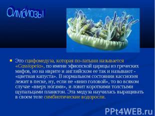 Это сцифомедуза, которая по-латыни называется «Cassiopeia», по имени эфиопской ц